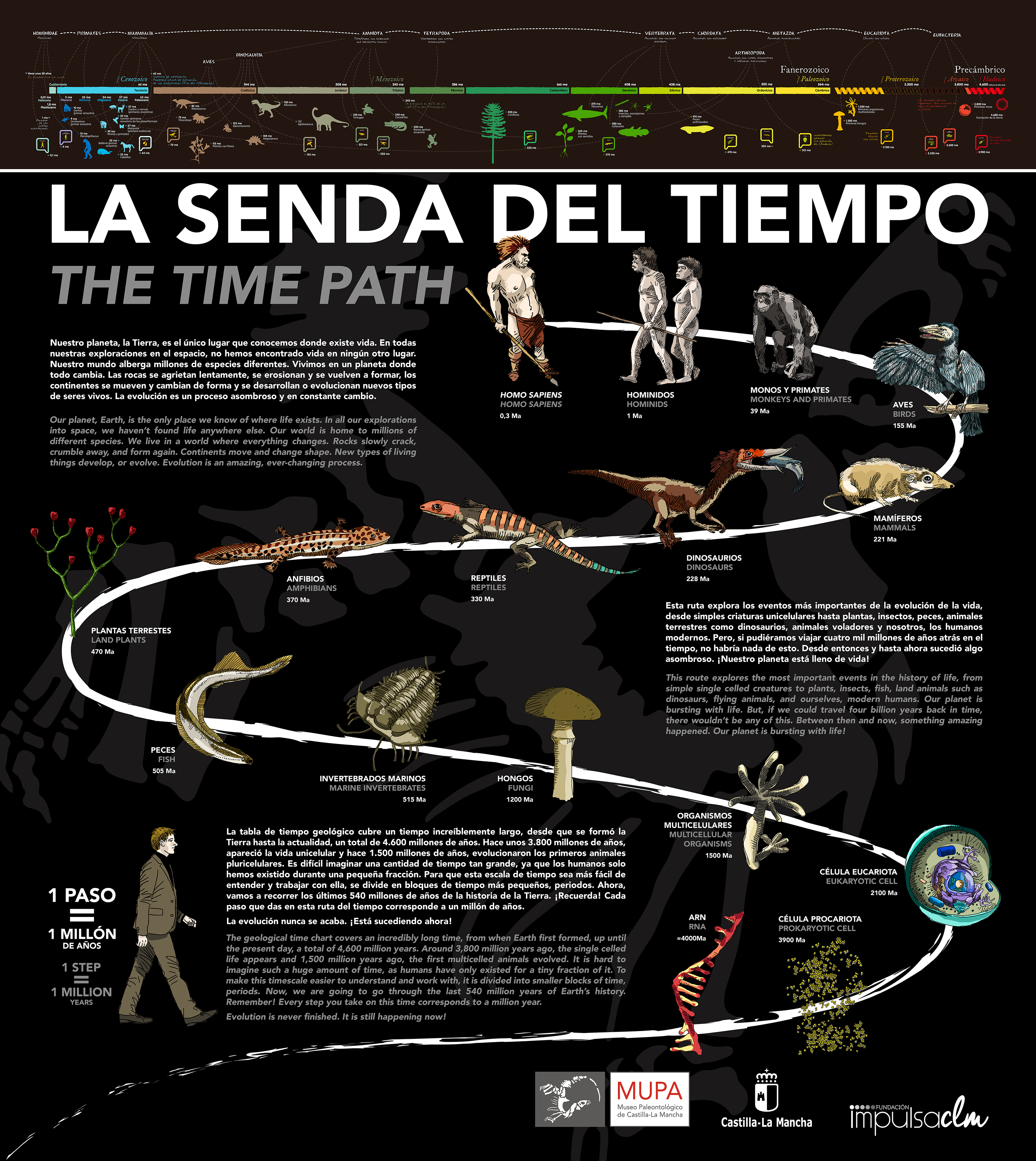 """«El Museo de Paleontología de C-LM pone en valor las zonas exteriores de sus instalaciones mediante un nuevo recorrido llamado """"La Senda del Tiempo"""""""