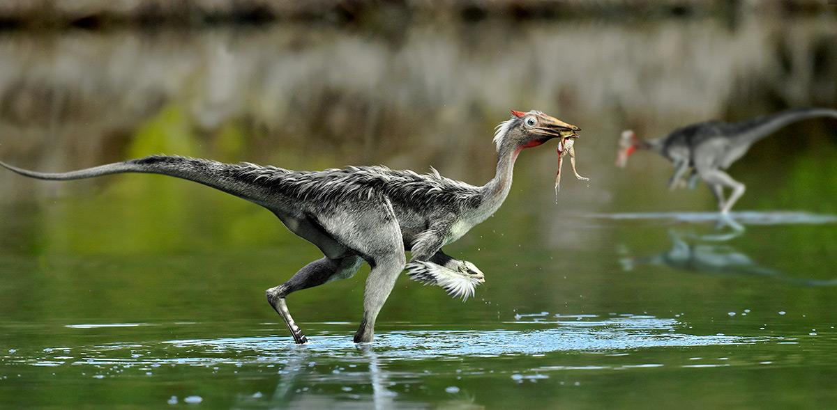 Nuevos datos sobre Pelecanimimus, el dinosaurio hallado en Cuenca que revolucionó la historia de los ornitomimosaurios en los años 90